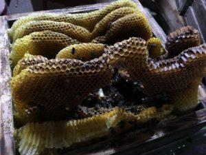 蜂の巣(消滅)